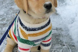 Adorable Puppies in Sweaters by Smatterst.com